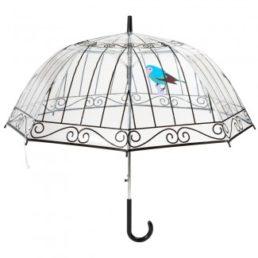 Angolobellaria_umbrella