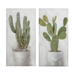 Cactus_angolobellaria